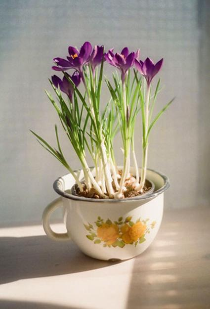 planters-crocuses-decorating-with-flowers-1