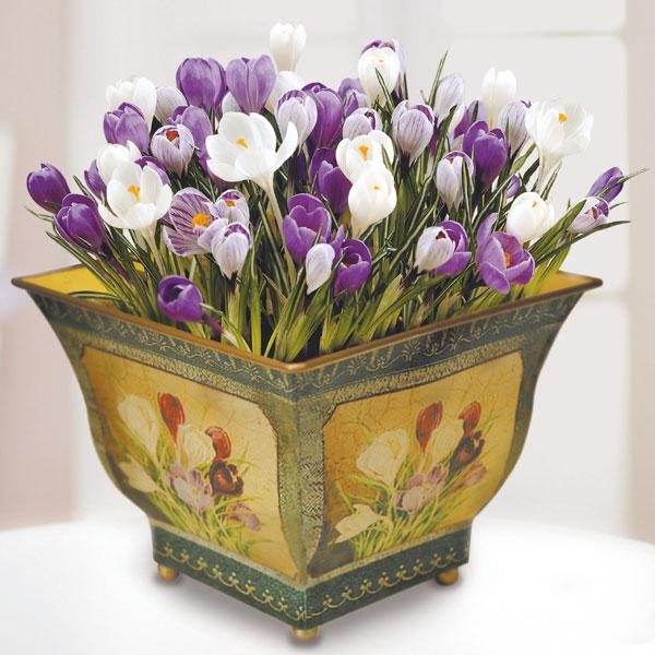planters-crocuses-decorating-with-flowers-2
