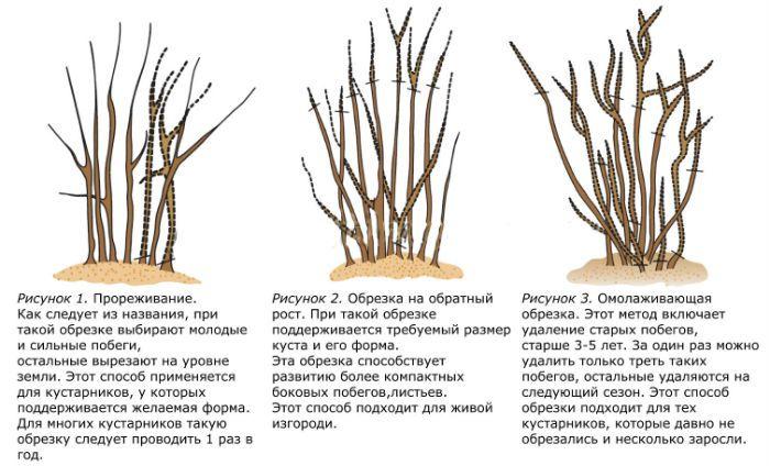 vidy-obrezki-sireni